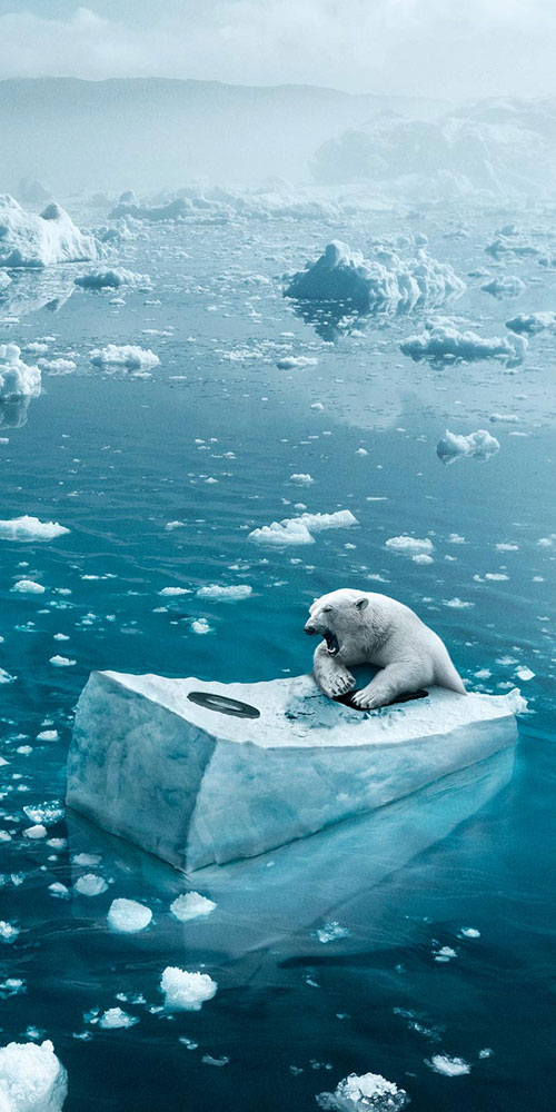 Energizer Polar Bear